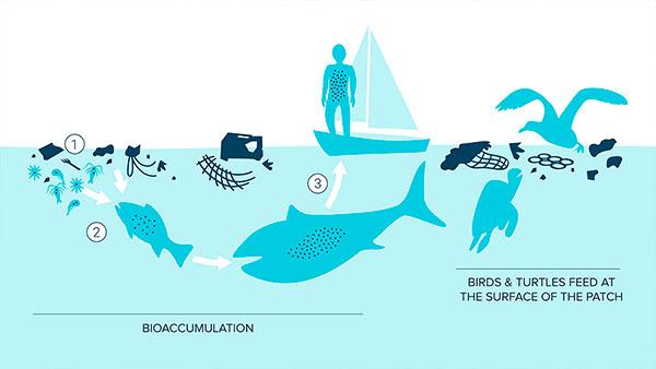 ilha plastico ecossistema