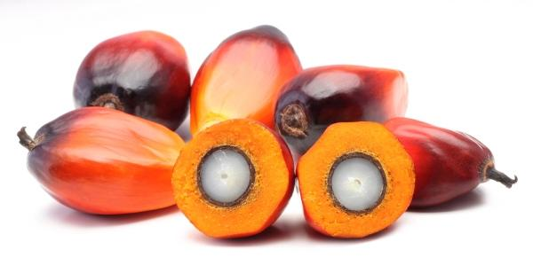 óleo de palmiste,