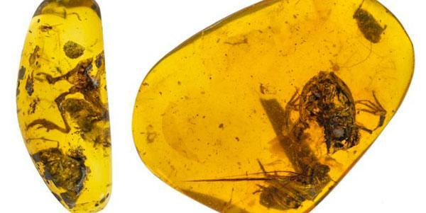o mais antigo fóssil de sapo