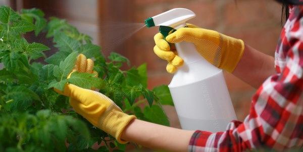 bicarbonato para plantas