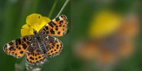 olhar borboleta