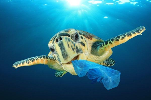 animais marinhos comer plastico
