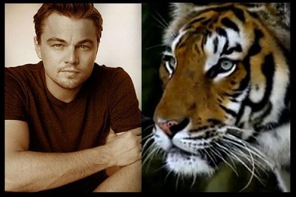 DiCaprio e os tigres do Nepal