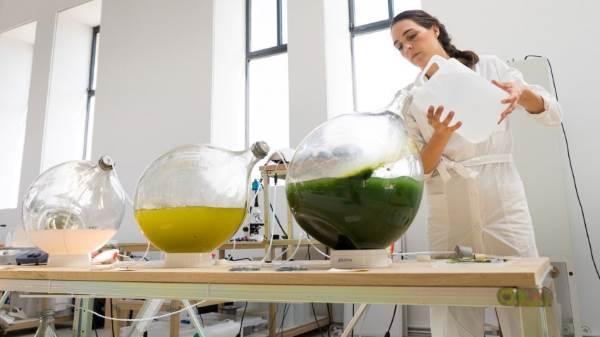 alga plastico 2