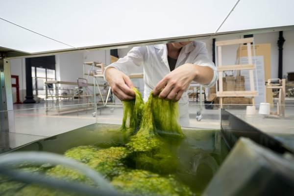 alga plastico 3