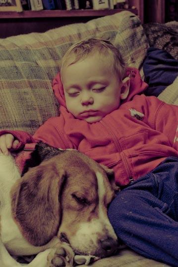 cao bebe dormindo