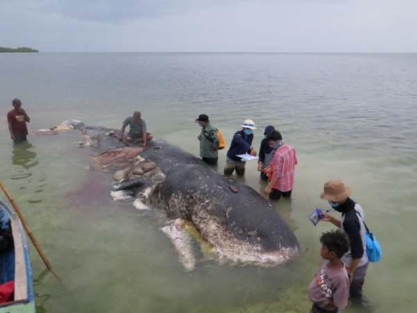 baleia indonesia 4