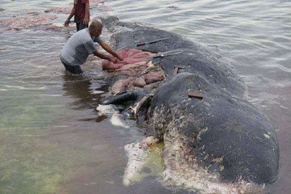 baleia plástico Indonésia