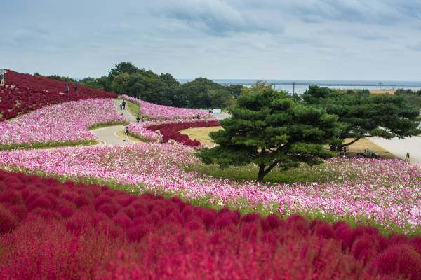 hitachi seaside park 3