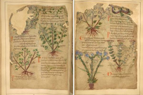 Manuscrito ervas medicinais