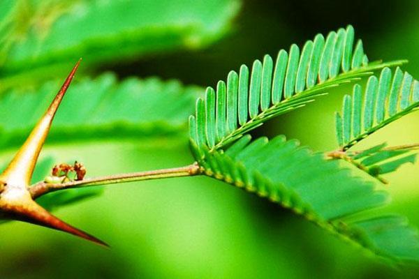 plantas e formigas
