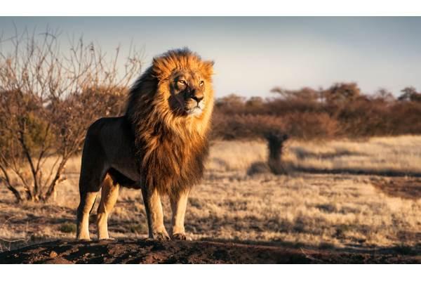 simbolismo do leão