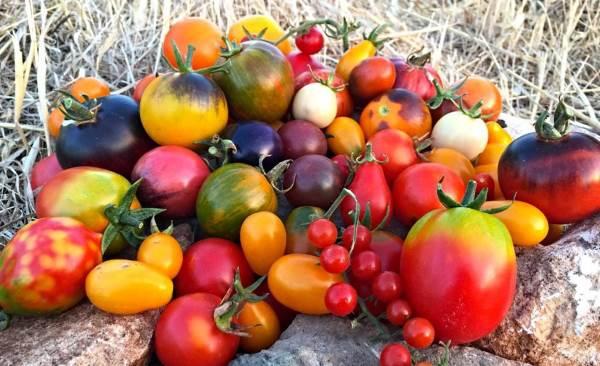 tomates variedades