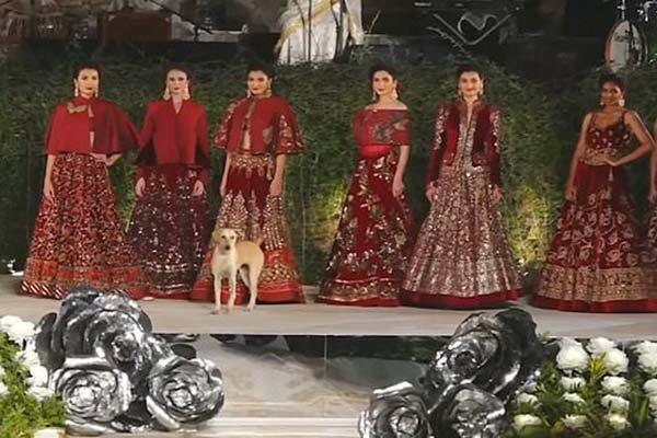 Vira-lata invade desfile de moda