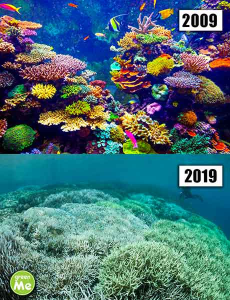 deafio corais