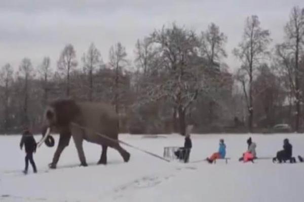Mambo, elefante