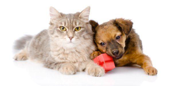 gatos e cachorro