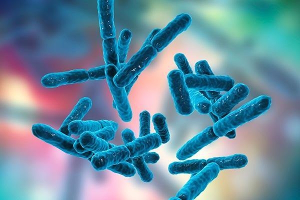 Probióticos e Prebióticos