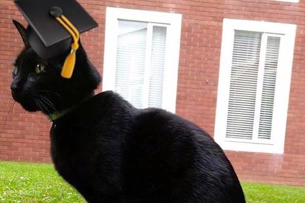 gato universitário