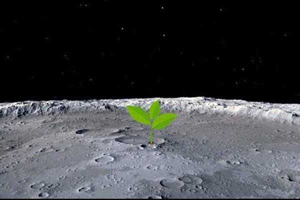 sementes na lua
