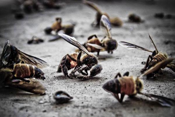 Insetos em risco de extinção