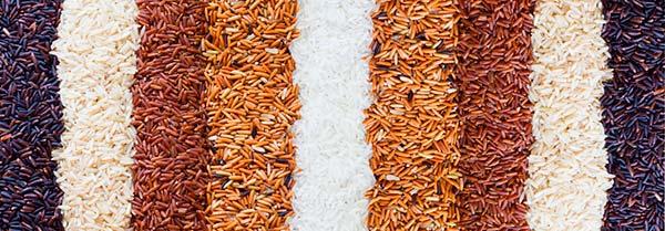 arroz tipos