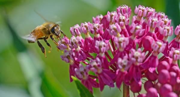 plantas abelhas 2