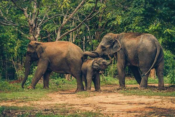 Santuários elefante