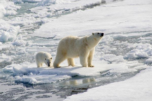urso-polar