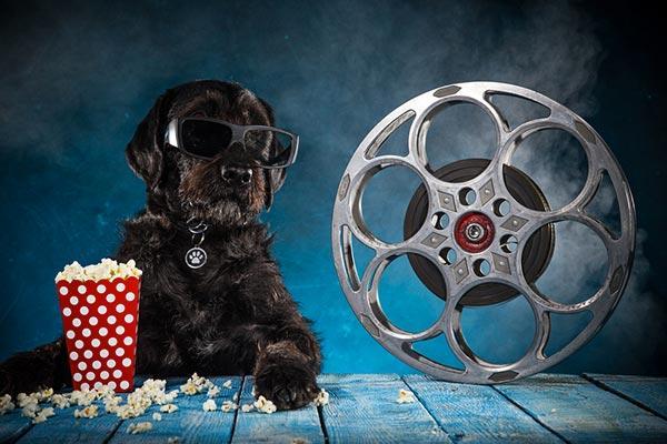 cachorro no cinema
