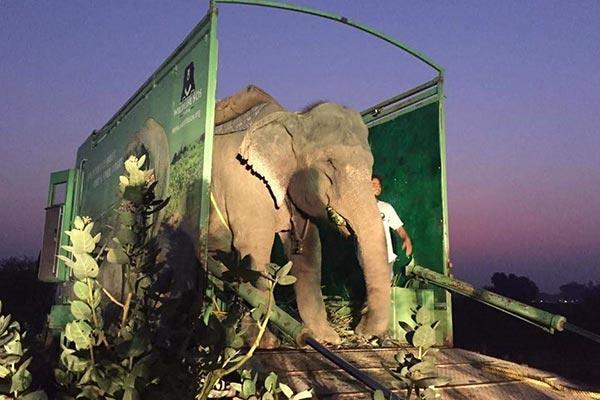 hospital para tratar elefantes