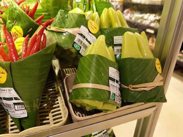 folhas bananeira 3