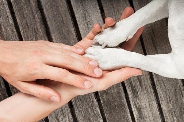 ajudar um animal
