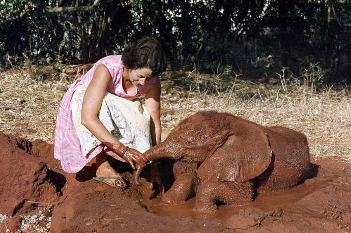 daphne elefante bb