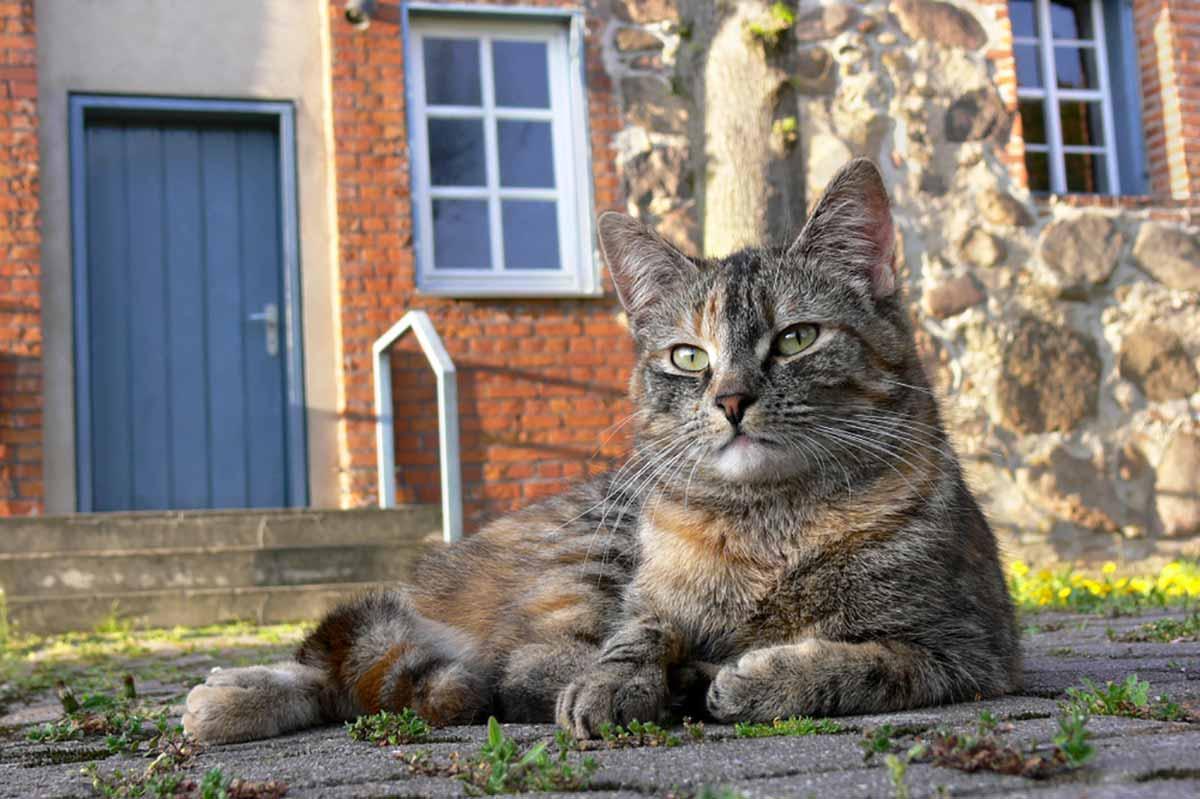 gato-esnobe