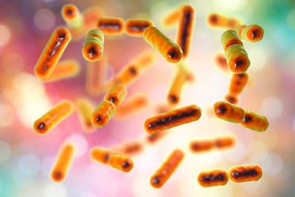 bactérias intestinais