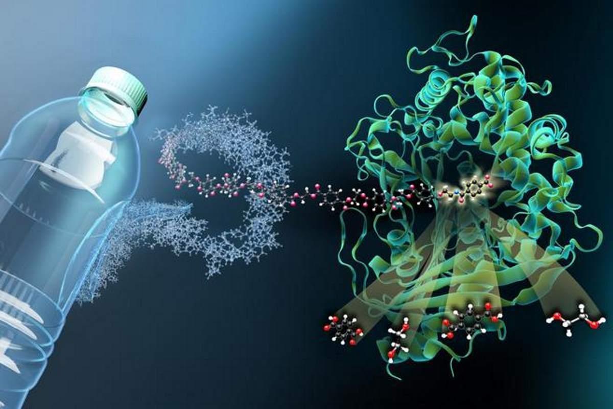 bacterias-comem-plastico