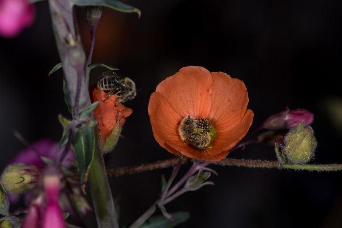 abelhas dormem