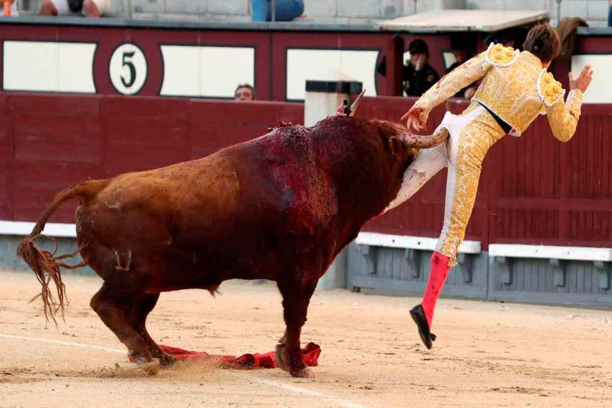 toureiro-ferido