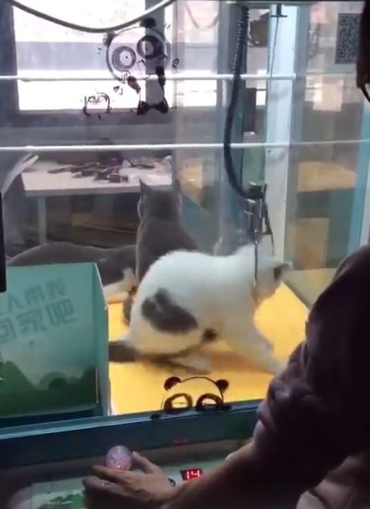 pesca gato