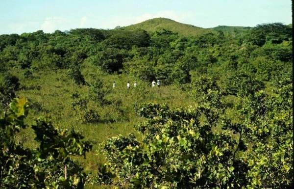 floresta costa rica 3