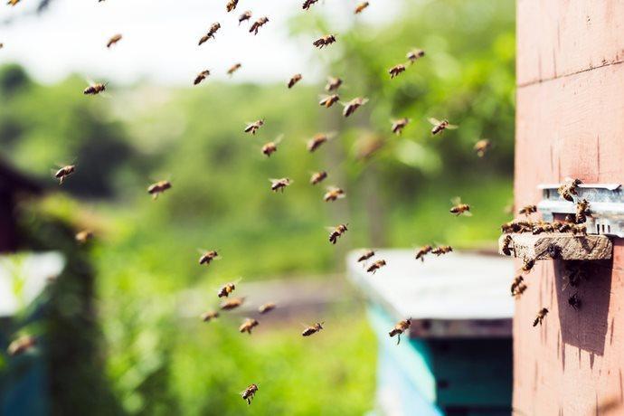 Trump abelhas