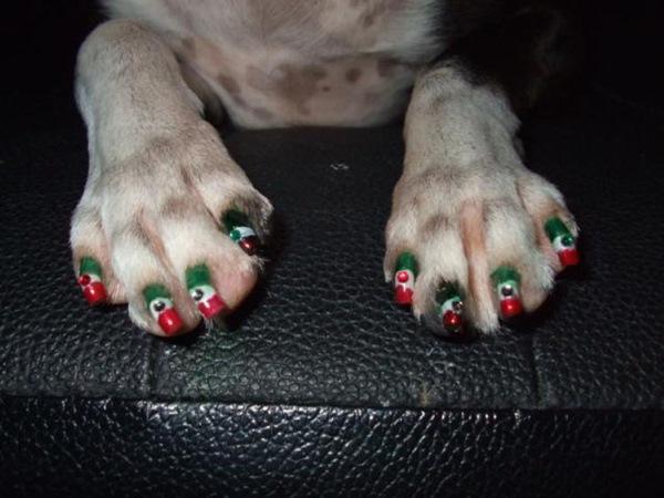unhas pintada cachorro 3