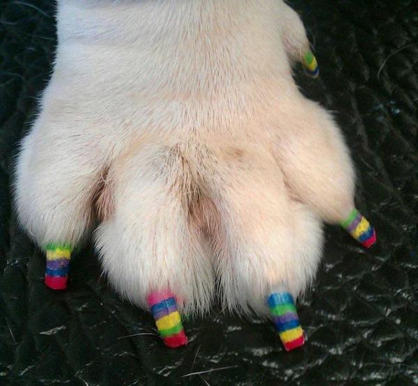 unhas pintada cachorro 4