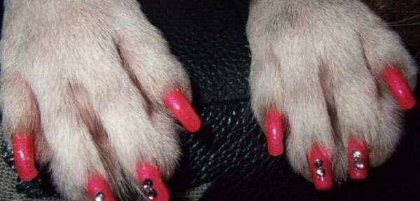 unhas pintada cachorro
