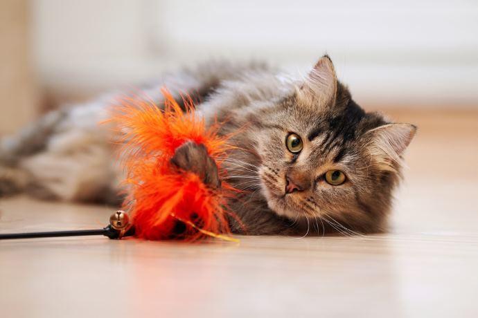Brincar gato