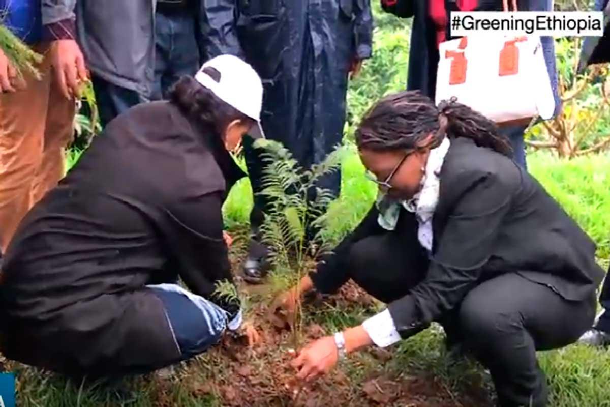 Green Legacy Initiative Etiópia