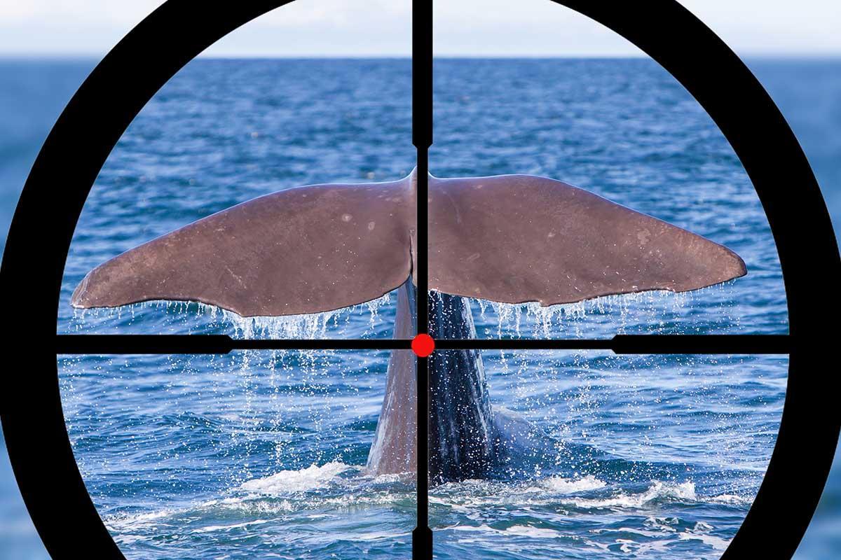 Islândia caça às baleias