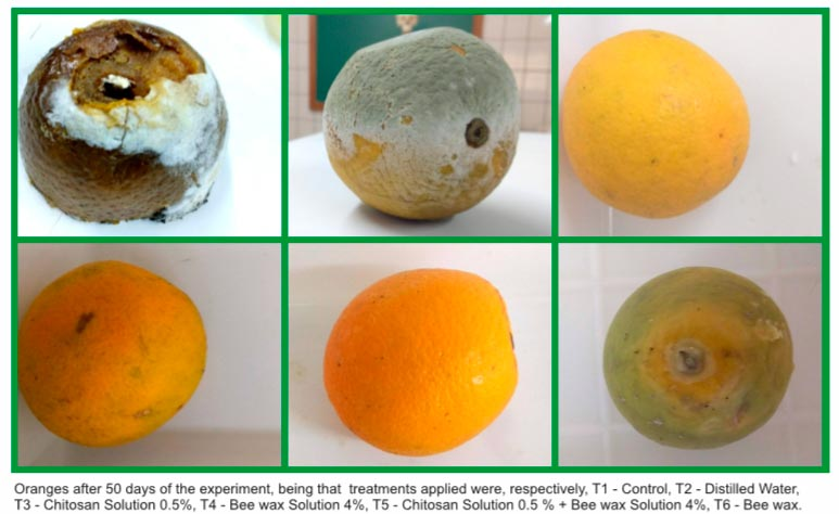 joao pedro laranja