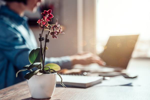 orquídea purifica ar 2
